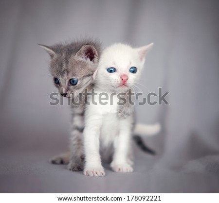 two kittens hugging  - stock photo