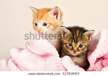 Two kittens in a pink blanket snug and safe - stock photo