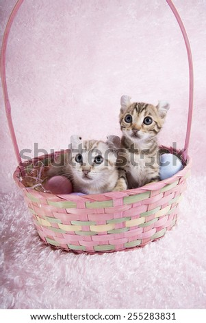 Two kittens in Easter basket with eggs on pink background - stock photo