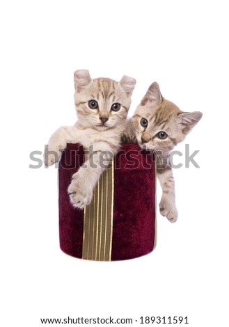 Two kittens inside red gift box together isolated on white background