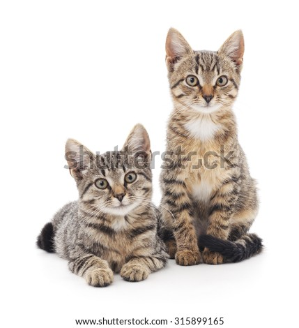 Two kittens isolated on a white background. - stock photo