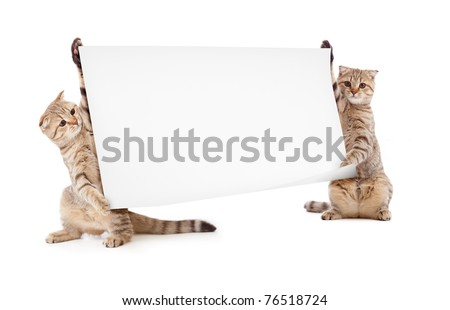 two kittens isolated with placard or banner