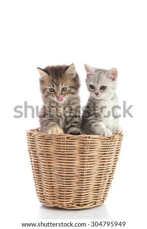 Two kittens licking lips in a basket on white background isolated - stock photo