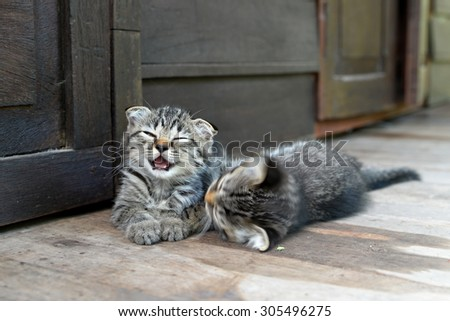 Two kittens playing - stock photo