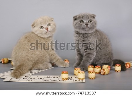 Two kittens playing in a bingo. - stock photo