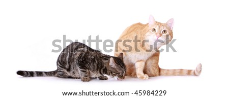 Two kittens relax on a white background