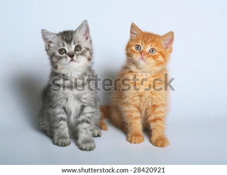 Two kittens sit.