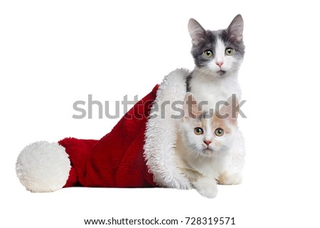 two kittens sitting in a santa hat isolated on white