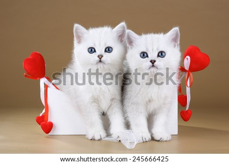 Two kittens sitting in box with hearts - stock photo
