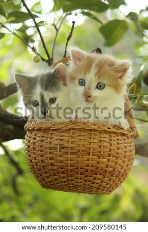 Two kittens sitting in the basket hanging on the tree branch - stock photo