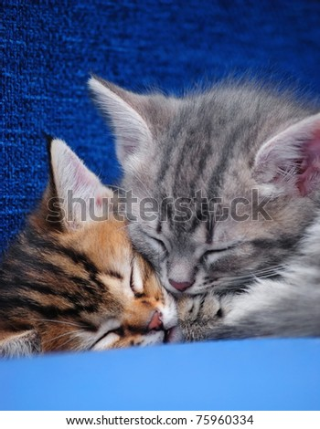 Two kittens sleep on a blue background - stock photo