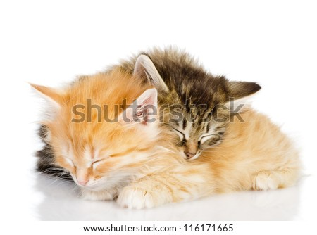 two kittens sleep together. isolated on white background - stock photo