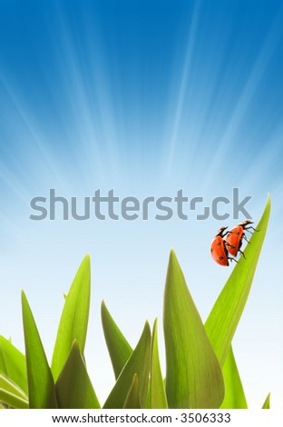 Two ladybugs loving each other on a green glass - stock photo