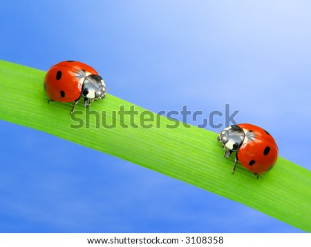 Two ladybugs on green leaf over blue sky