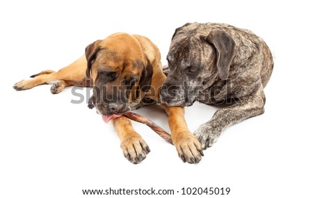bully sticks stock photos images pictures shutterstock. Black Bedroom Furniture Sets. Home Design Ideas