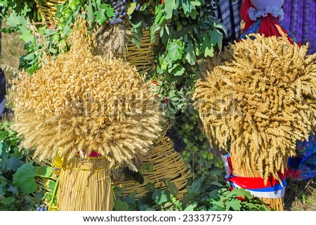 Two large sheaf of wheat , barley represented as an element of the decorations on the harvest festival. - stock photo