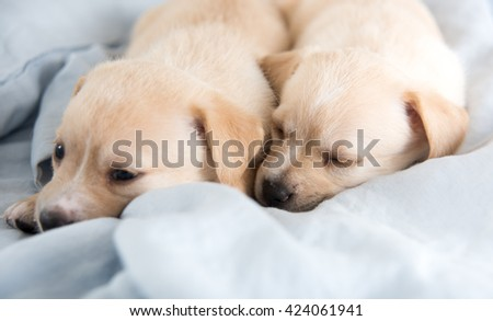 Two Light Colored Mixed Breed Puppies Sleeping on Bed