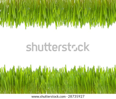 two line of green grass - stock photo