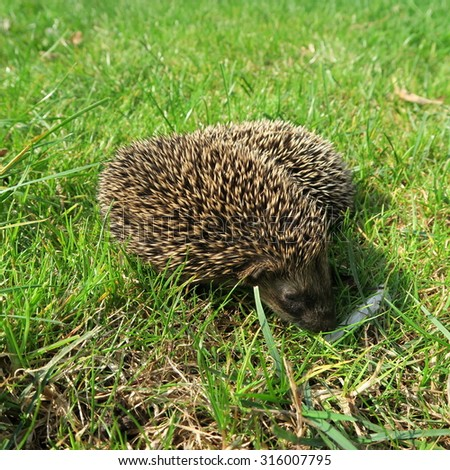 two little babies at play green grass hedgehog