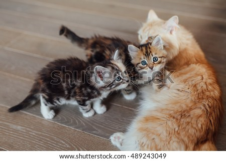 Two little cats are sitting close to their mother cat. House background.