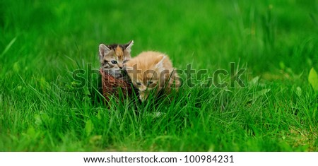 Two little cats in wicker basket on green grass outdoors