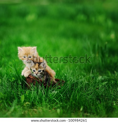 Two little cats in wicker basket on green grass outdoors - stock photo