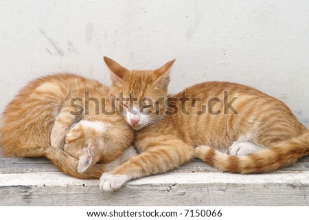 Two little cats laying together on a cloudy  day - stock photo