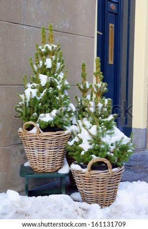 two little christmas trees in basket standing by a entrance door as a decoration for the holidays - stock photo