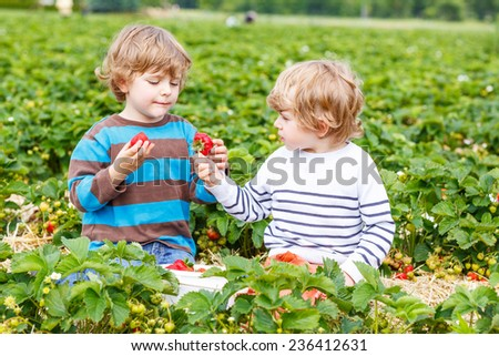 Two little friends having fun on strawberry farm in summer. Feeding each other with organic berries and spending time together. - stock photo