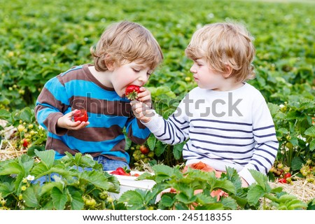 Two little friends having fun on strawberry farm in summer. Feeding each other with organic berries and spending time together. Cute blond brother boys eating healthy berries. - stock photo
