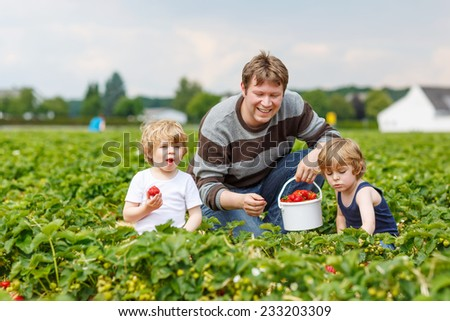 Two little funny kid boys and their father on organic strawberry farm in summer, picking and eating fresh ripe berries. Happy family spending time together.
