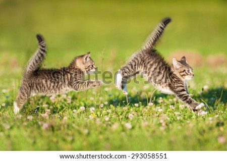 Two little funny kittens playing outdoors in summer - stock photo