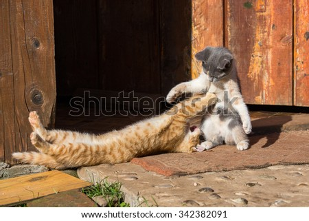 Two little funny kittens playing outdoors in summer. Close up - stock photo