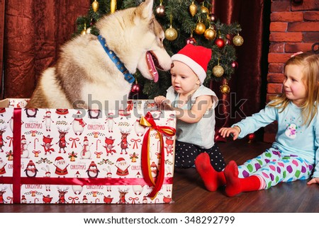 two little girls and siberian husky dog playing with presents in christmas decorations  - stock photo