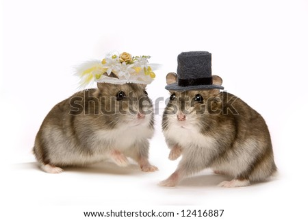 Two little hamsters wearing hats during their wedding ceremony - stock photo