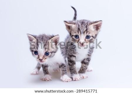 Two little kittens - stock photo