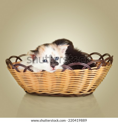 Two little kittens. Cat sitting in basket - stock photo