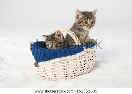 Two little kittens looking out of a wicker basket - stock photo