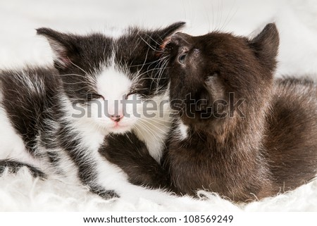 Two little kittens lying on a blanket