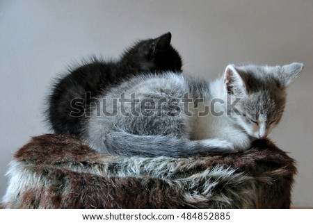 Two Little Kittens Sleeping On Fluffy Stool