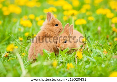 Two little rabbits outdoors - stock photo