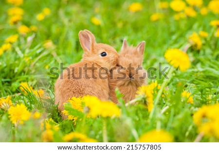 Two little rabbits sitting in the grass - stock photo