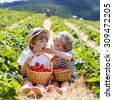 Two little sibling kid boys having fun on strawberry farm in summer. Chidren eating healthy organic food, fresh berries. - stock photo
