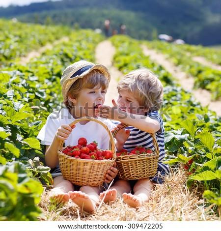 Two little sibling kid boys having fun on strawberry farm in summer. Chidren eating healthy organic food, fresh berries. - stock photo