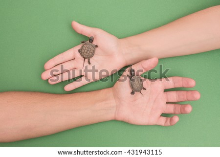 Two little turtles are crawling on hands.