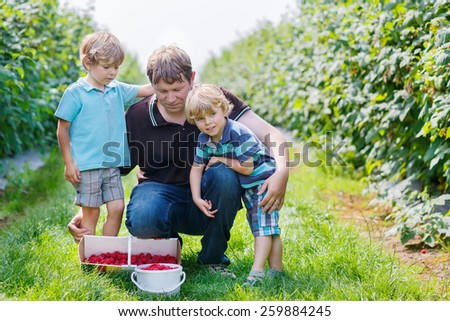 Two little twins kid boys and their dad on organic raspberry farm in summer, picking berries. Healthy food and snack in summer.