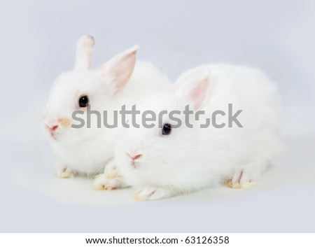 Two little white rabbits on grey background - stock photo