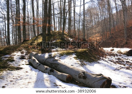 two logs in the snow in a deciduous forest - stock photo