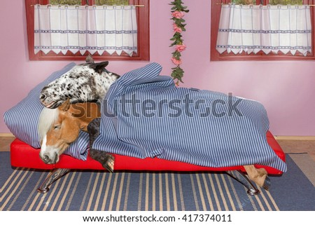 Two long sleeping Horses are sleeping in the bedroom covered with a blue blanket.. - stock photo