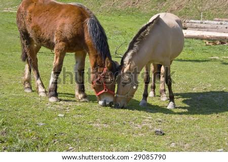 two lovely horses eating - stock photo